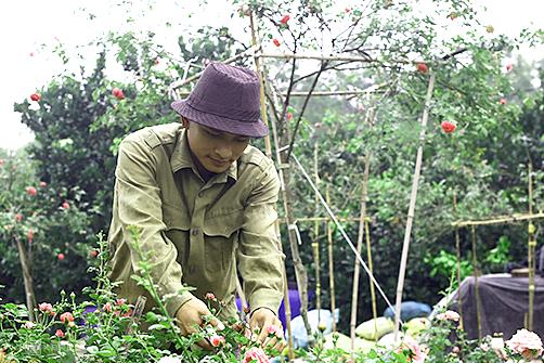 Dự án trang trại hoa hồng của 8X thu về 300 triệu mỗi tháng